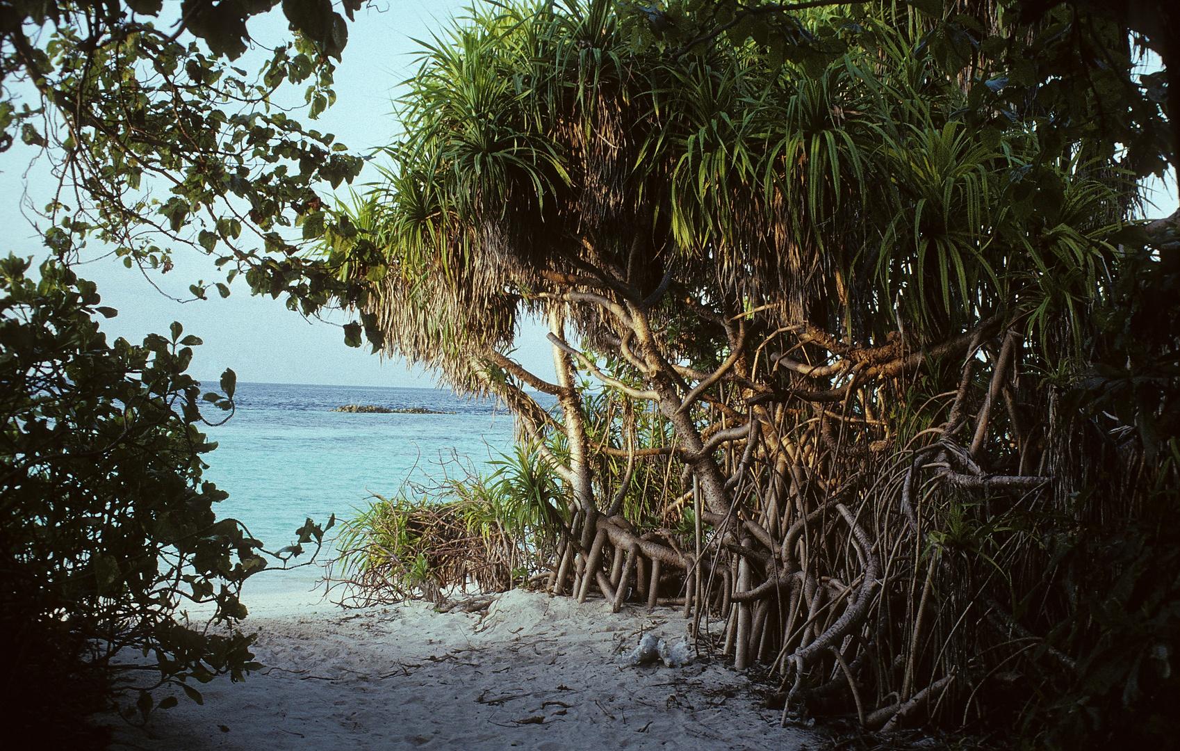 tropische Pflanzen mit Stelzwurzeln