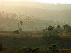 Tropischer Morgennebel auf Rinca