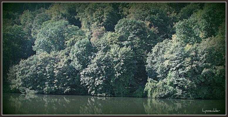Tropischer Regenwald? Amazonas?