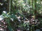 Tropischer Regenwald bei Mossman Gorge