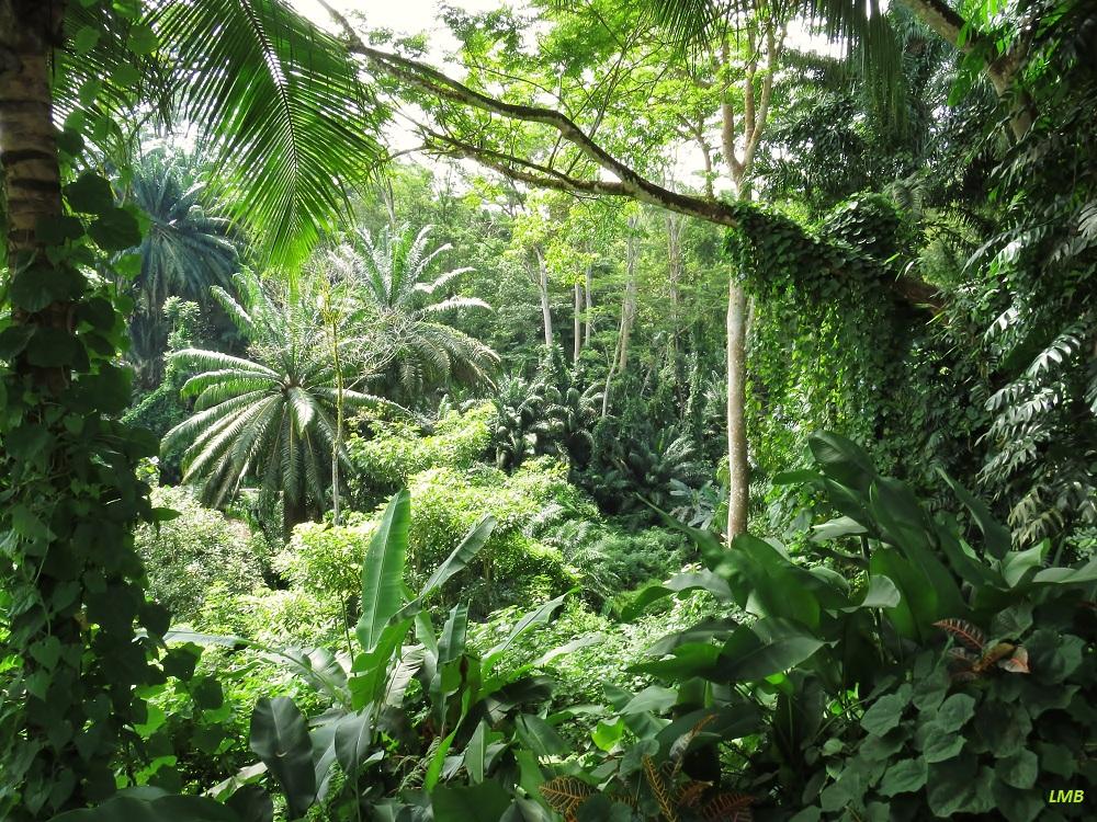 tropischer regenwald im sonnenschein foto bild world. Black Bedroom Furniture Sets. Home Design Ideas