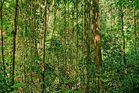 Tropischer Urwald