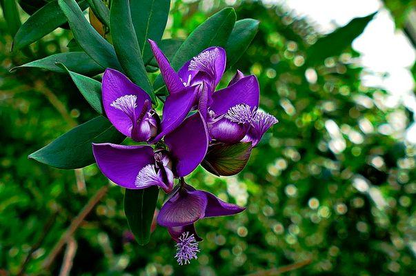 Tropisches Mittwochsblümchen
