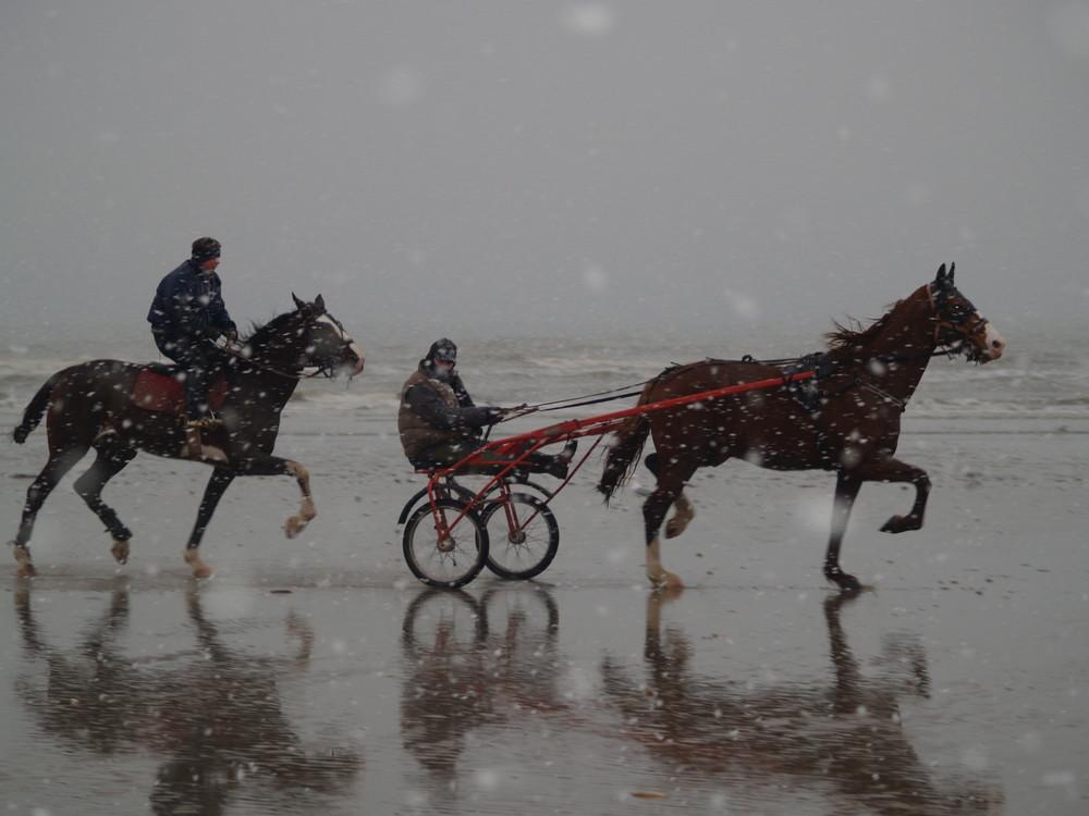 Trotteurs sous la neige