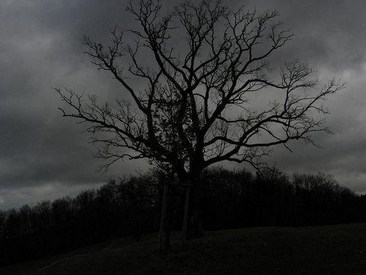 Trotz der Dunkelheit ein gutes Bild, oder nicht?