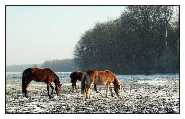 Trotz der Kälte fühlten sich die Pferde wohl