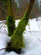 trotz Schnee ein grünes Kleid