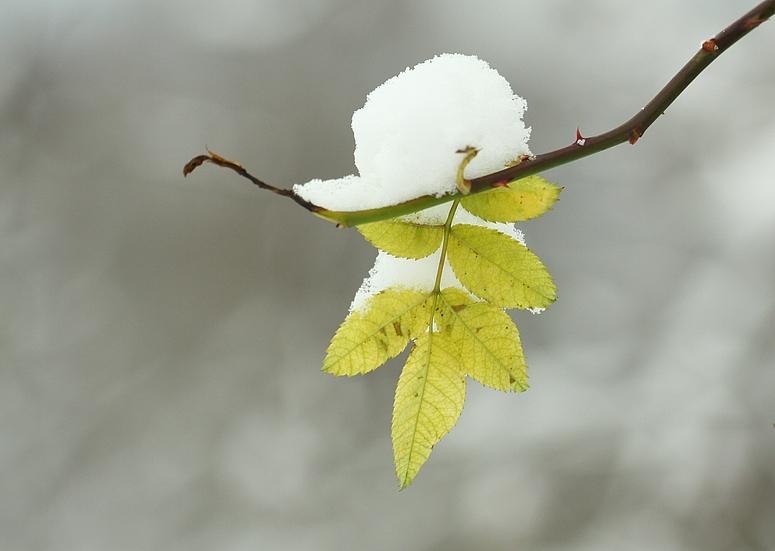 Trotz Schnee und Eis...