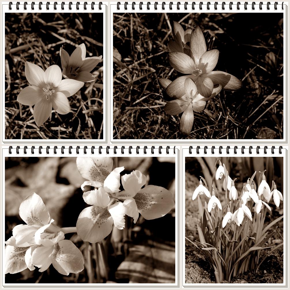 Trüber Frühlingstag
