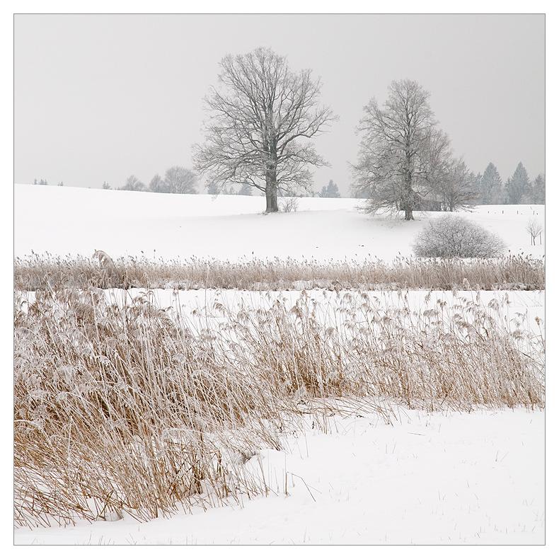 Trüber Wintertag II