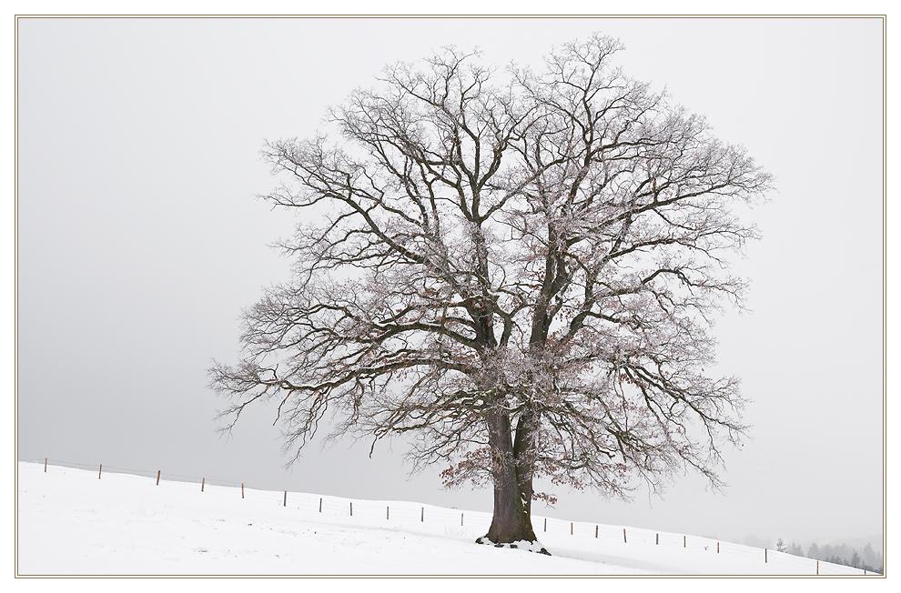 Trüber Wintertag III