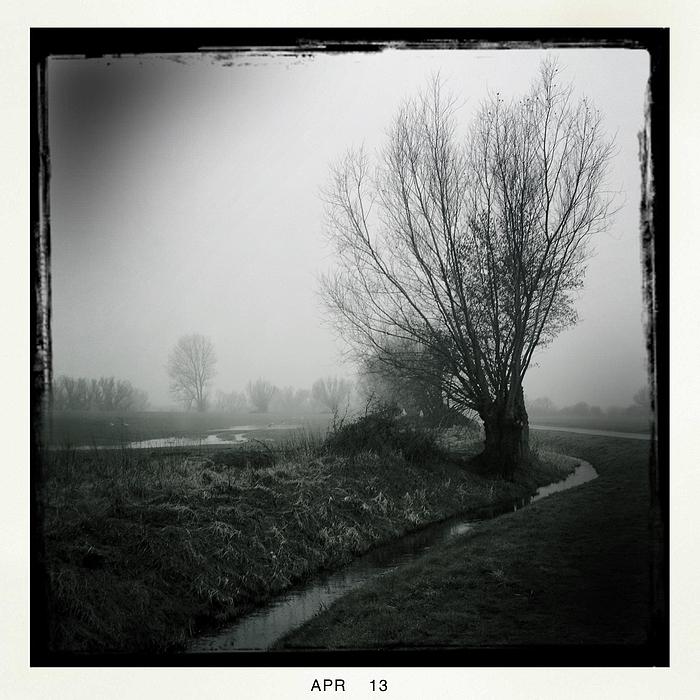 trüblig neb