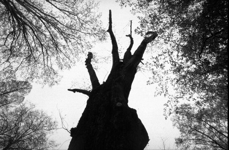 Trutzbaum