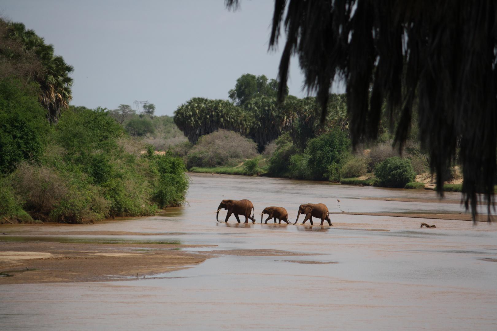 Tsavo Ost Kenya - Galana River