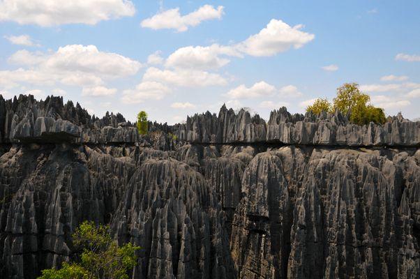 Tsingy de Bemaraha- Die Festung der Artenvielfalt