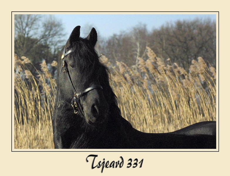 Tsjeard 331