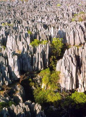Tsungy de Bemaraha