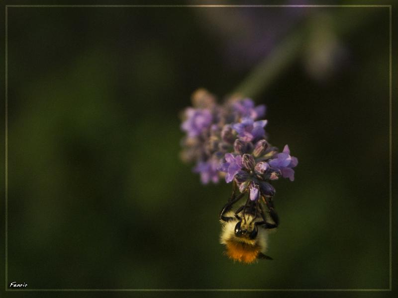 Tête à tête avec une abeille