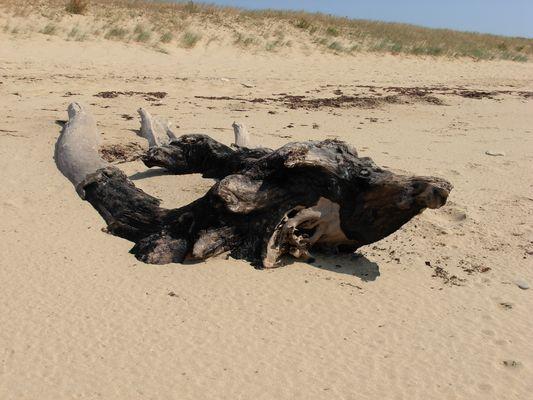 Tête de veau sur lit de sable
