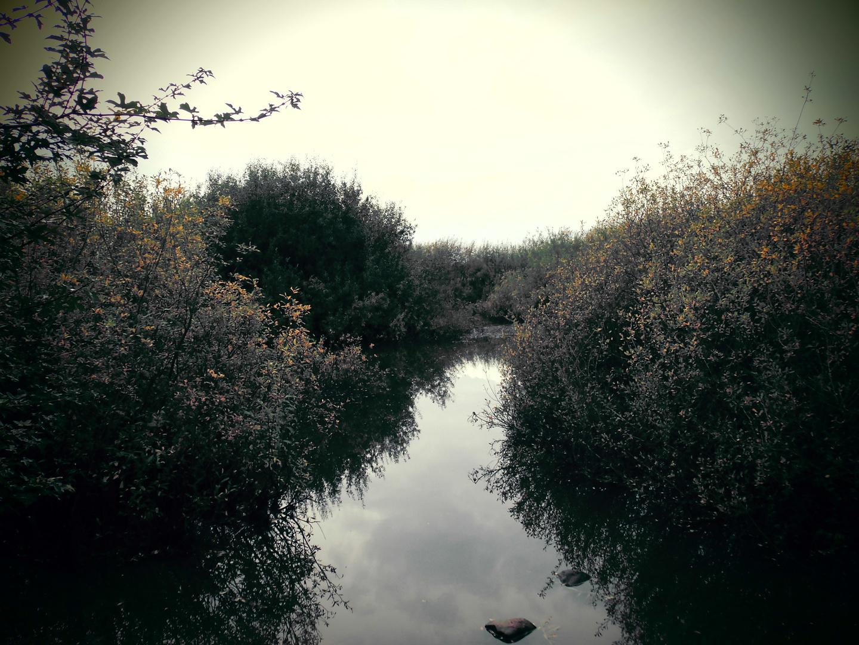 Tümpel im Herbst