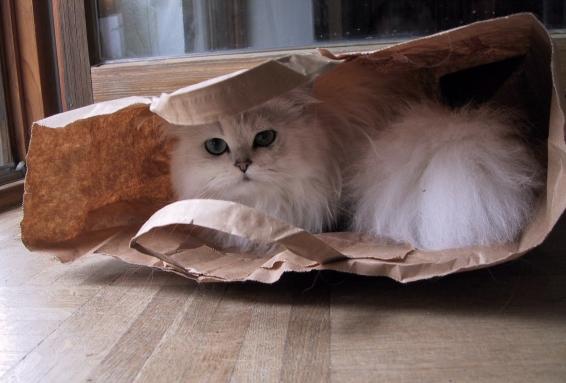 Tüten-Katze