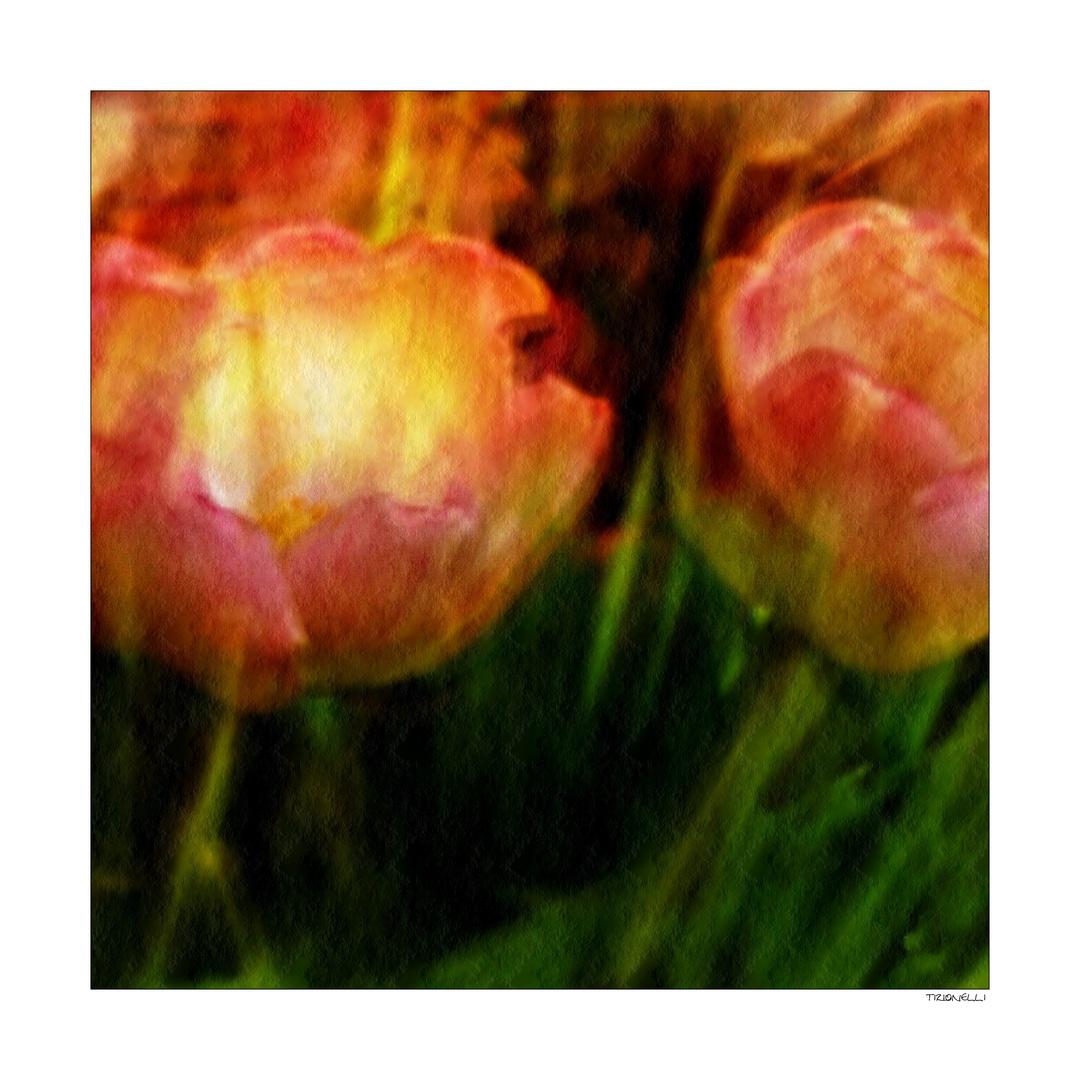 tulip # 4