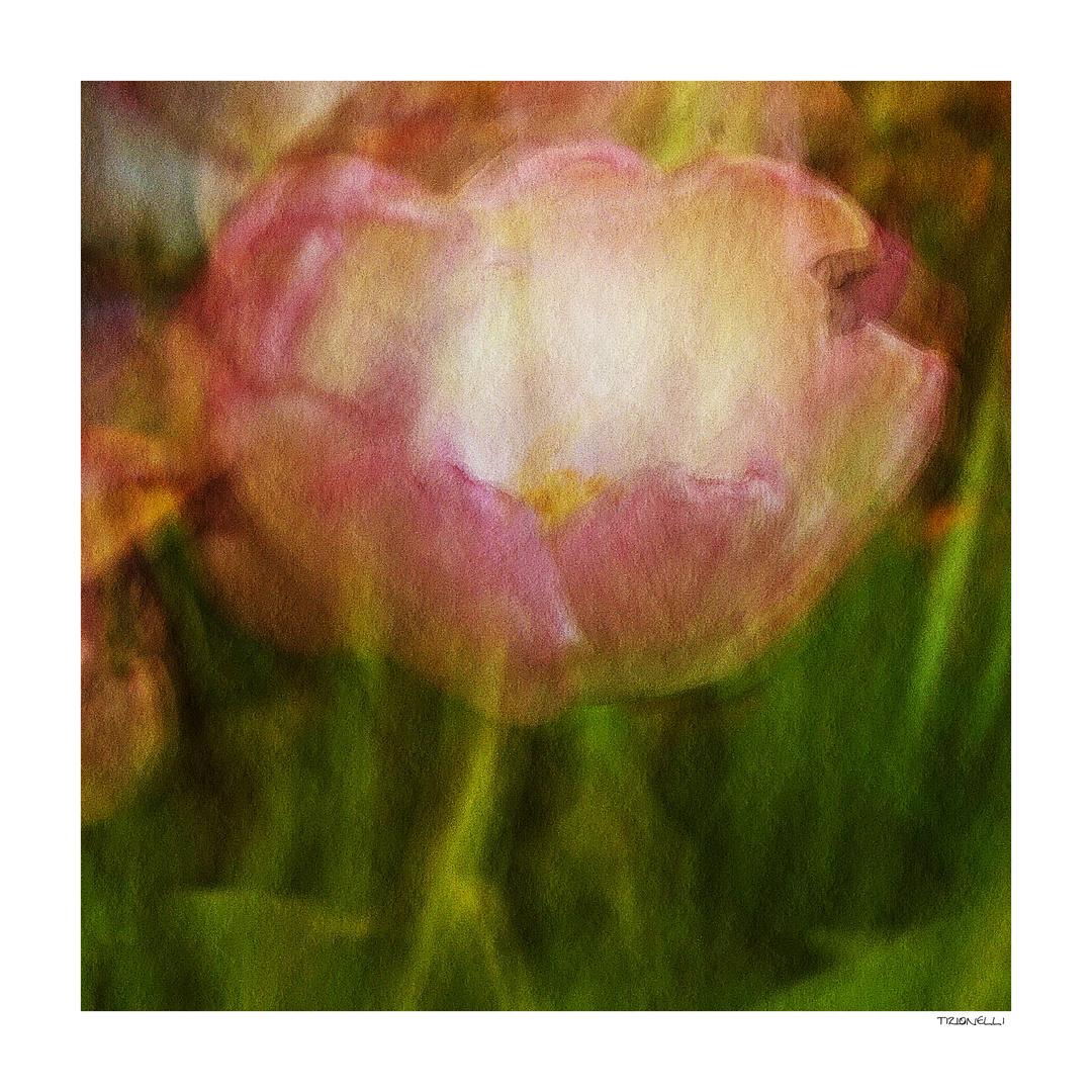 tulip # 6