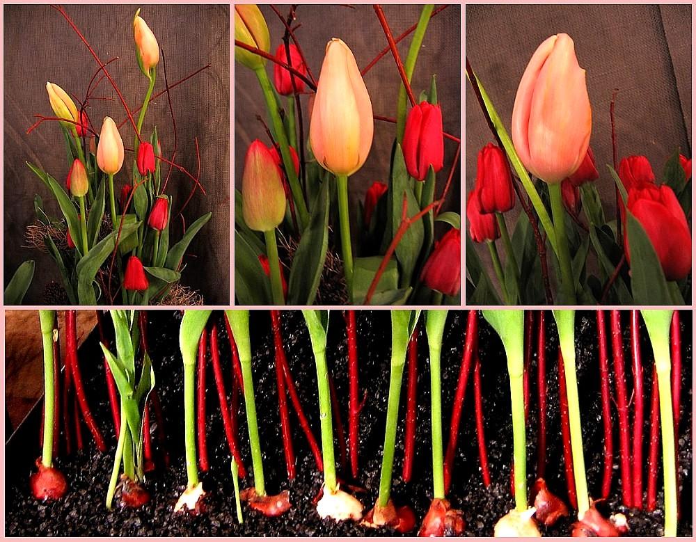 Tulip Art 2