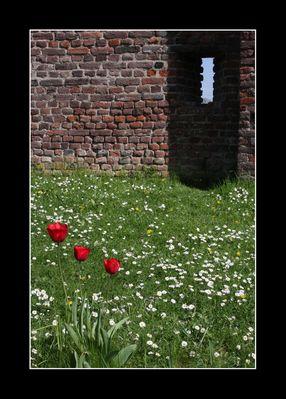 ~ tulip ~