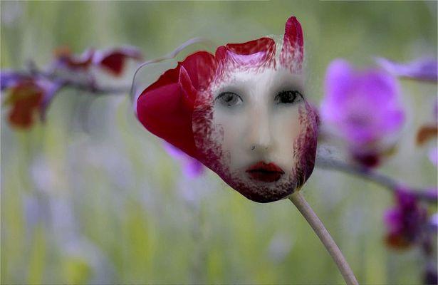 Tulipa allein auf der Wiese