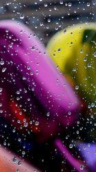 Tulipanes en gotas