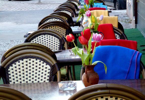 Tulipani in attesa