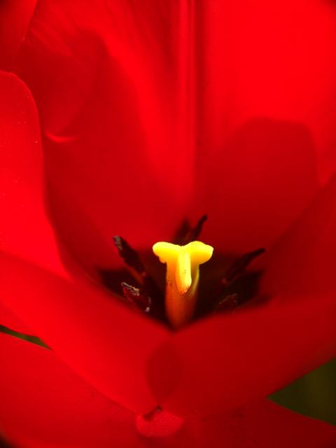 tulipe macros