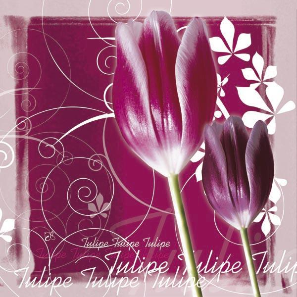 Tulipes bordeaux