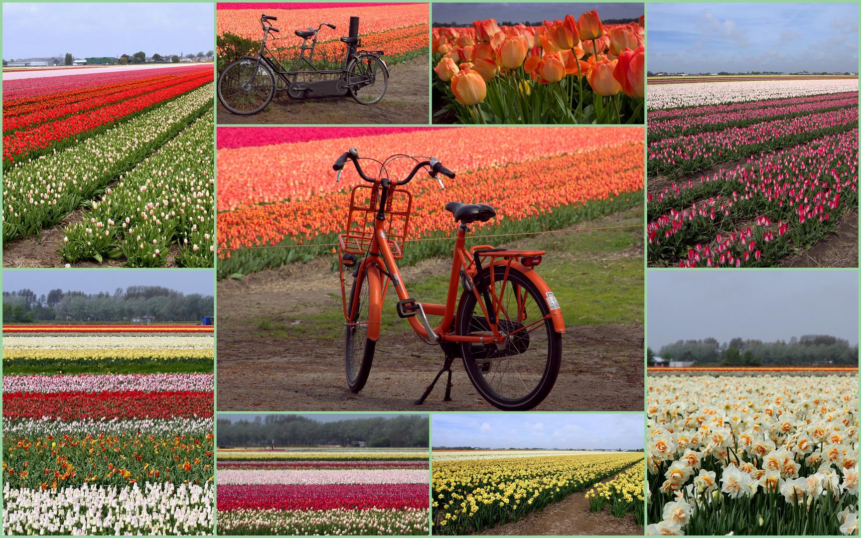 tulipes, jonquilles etc ...
