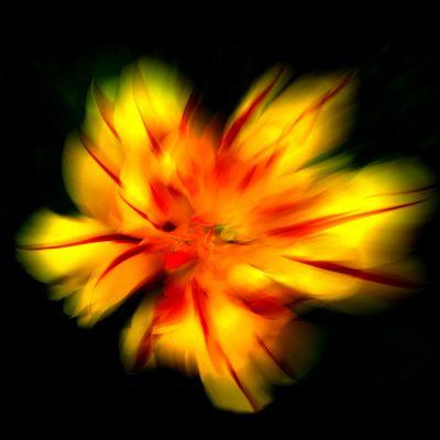 Tulipfire