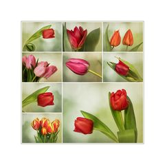 Tulipomanie.....