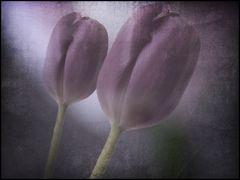 tulips...2