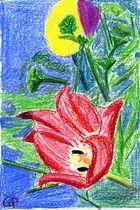 Tulpe 02