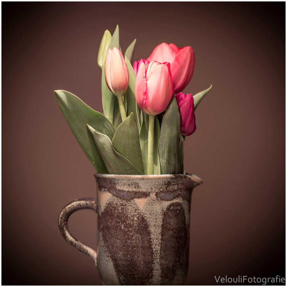 Tulpe auf Küchentisch