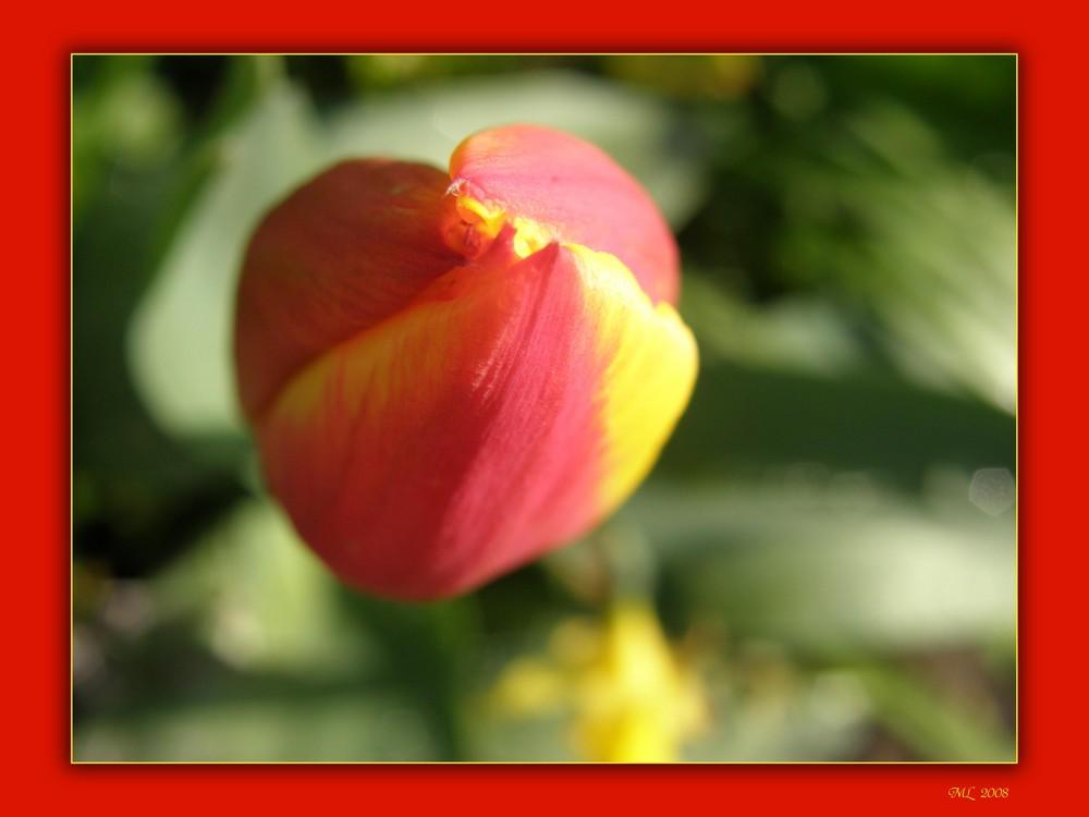 Tulpe (mal anders)