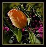 Tulpe . . . . . . tulipe jaune