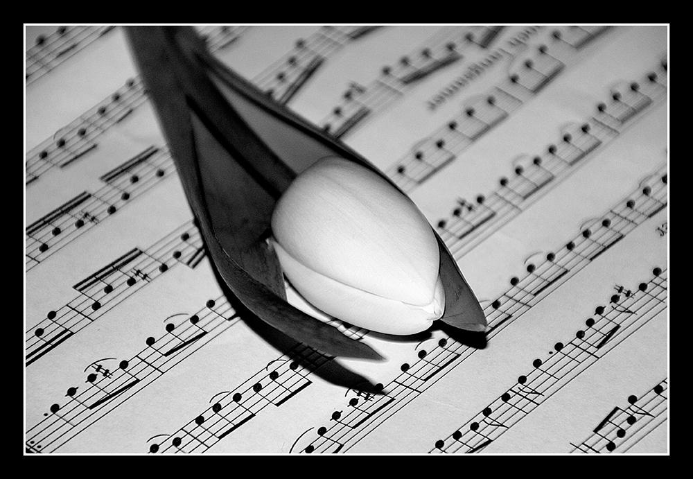 Tulpe und Noten