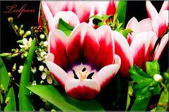 Tulpen ²