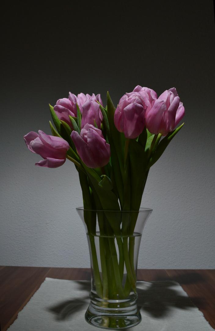 tulpen foto bild pflanzen pilze flechten bl ten kleinpflanzen tulpen bilder auf. Black Bedroom Furniture Sets. Home Design Ideas