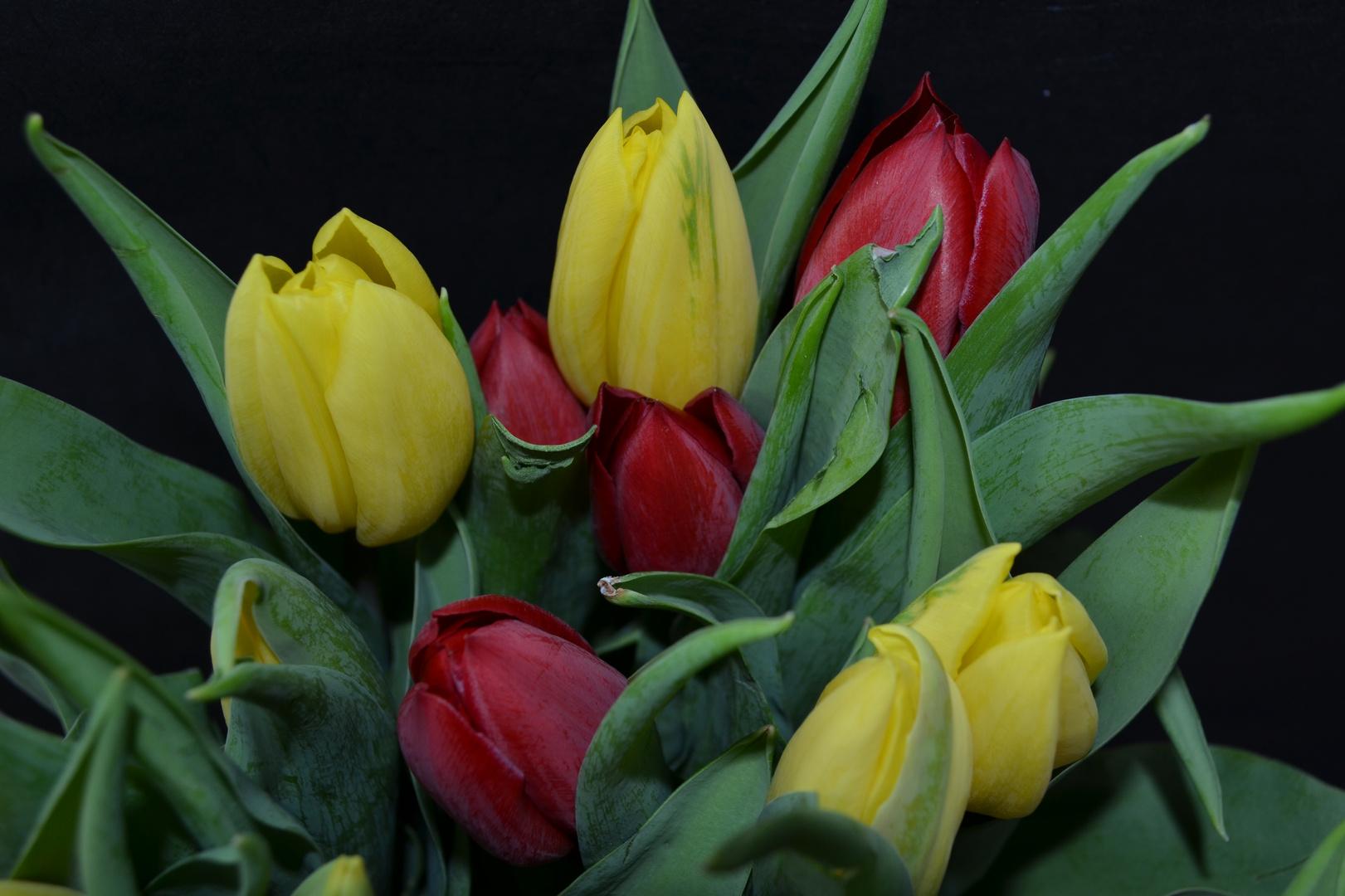 # Tulpen 4...#