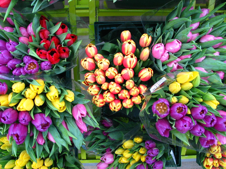 Tulpen aus Amsderdam?