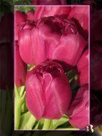 * ... Tulpen aus Amsterdam! *