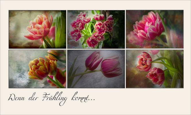 ~Tulpen aus Amsterdam~