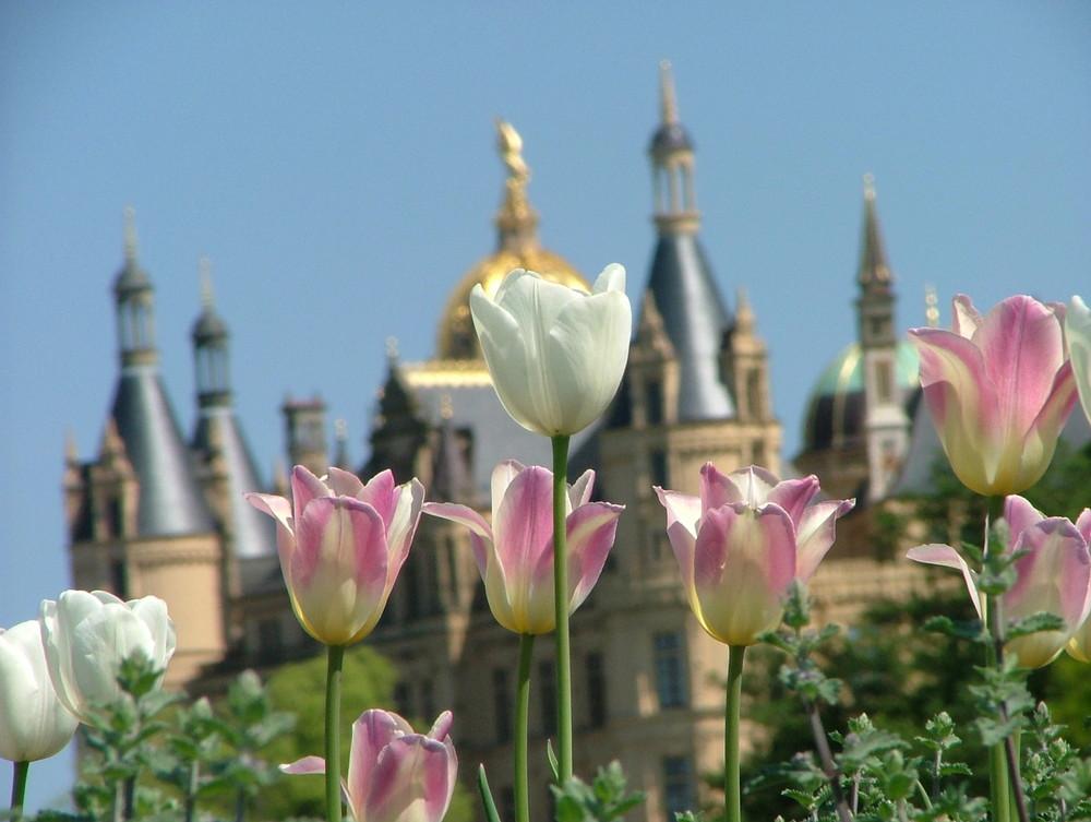 Tulpen bei der BUGA 2009